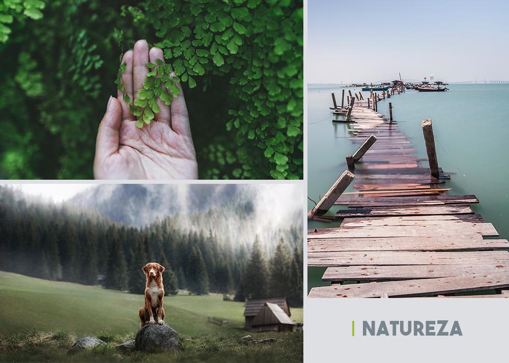 coleção de fotos Natureza
