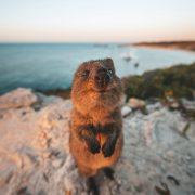 Estas fotos hilárias de animais farão o seu dia