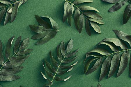 Dicas de Marketing Ambiental Para Empresas que Querem se Tornar Eco-Friendly em 2021