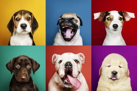 Deixe o Seu Pet Famoso no Instagram Com Estas 7 Dicas