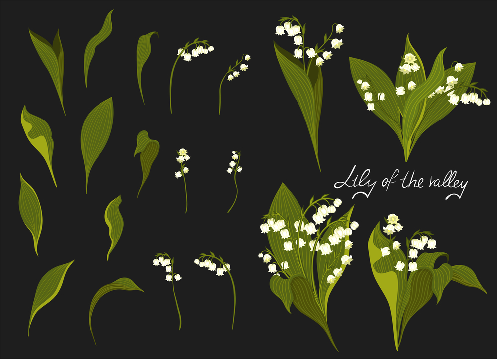 spring lilies vector