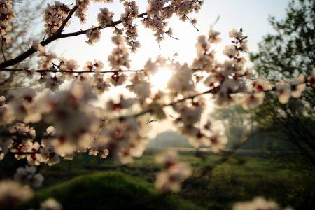 wczesna wiosna zdjęcia