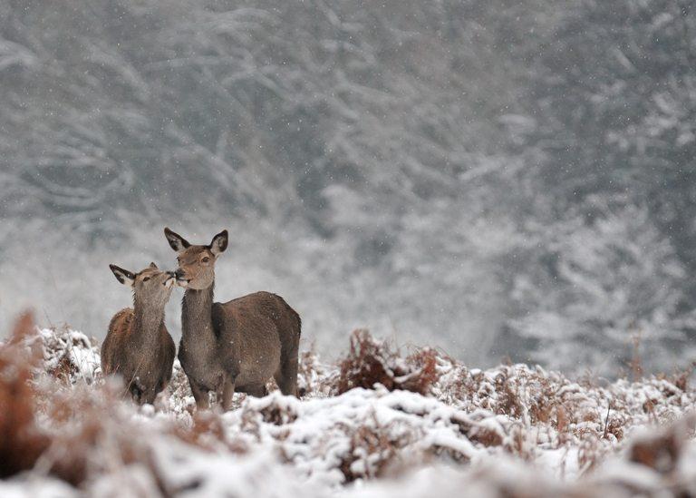 Animals in nature © Depositphotos