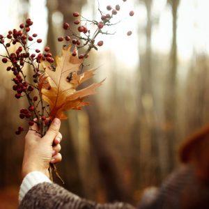 Тематическая коллекция: Осенние моменты