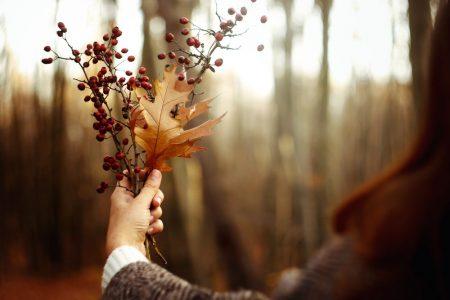 осень фото сток