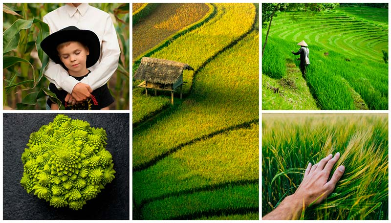 pantone-color-of-the-year-greenery-collection-of-images