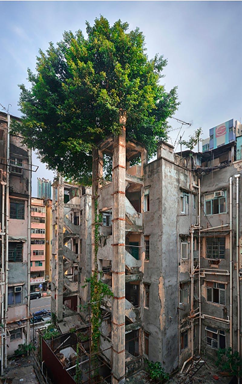 Wild Concrete #11, Hong Kong, 2013.