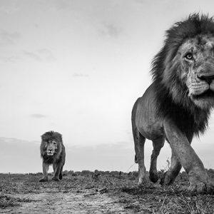 Крупным планом: Интервью с фотоохотником Анупом Шахом