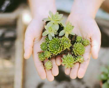 Тематическая коллекция: Тайная жизнь домашних растений