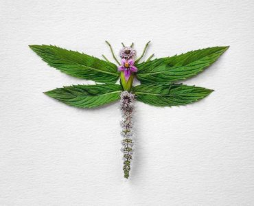 Творческая лихорадка: Еще 10 фотопроектов для вдохновения