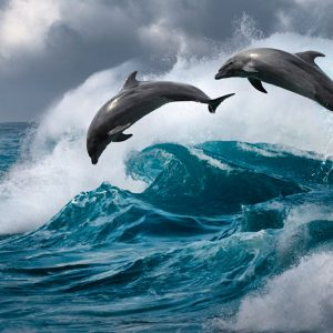 Тематическая коллекция: Захватывающе красивая подводная жизнь