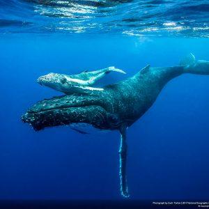 Невероятные фотографии участников конкурса National Geographic – Лучший природный фотограф года
