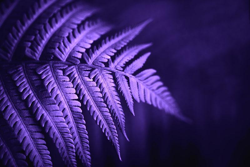 Тематическая коллекция: ультрафиолетовый — цвет года по версии Pantone