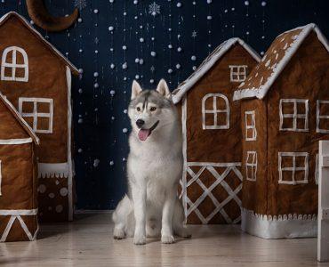 Тематическая коллекция: год собаки