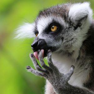 Поездка в зоопарк: Интервью с Эдвином Баттером