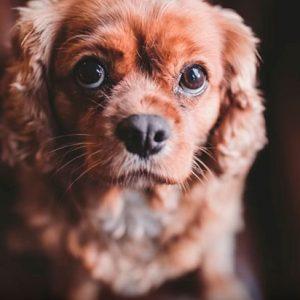 Как фотографировать собак — 10 лайфхаков от Фила Эндрю Харриса