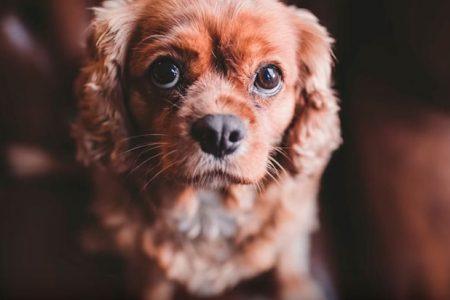 как-фотографировать-собак