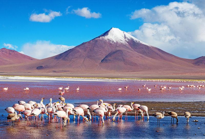 Тематическая коллекция: приключения в Южной Америке