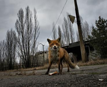Пьерпаоло Миттика: О социальных проблемах, экологии и экспедиции в Чернобыль