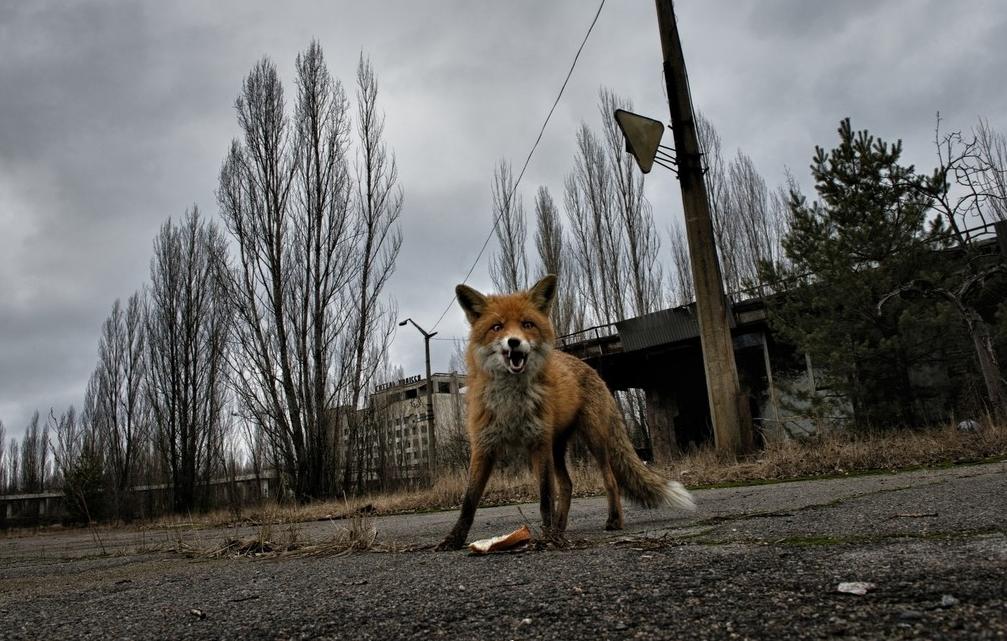 pierpaolo mittica chernobyl