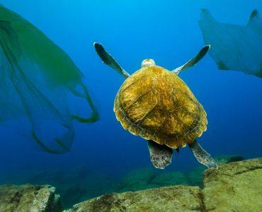Коллекция фотографий: Спасение океана