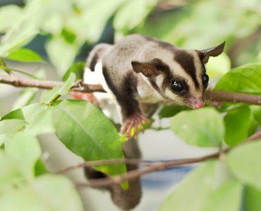 Коллекция фотографий: Исчезающие виды животных
