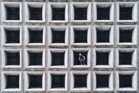 Jedrzej-Franek-phtoography-Catch-The-Pigeon