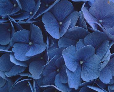 Чжэнди Чжан и минимализм: победитель iPPAwards в категории «Флора»