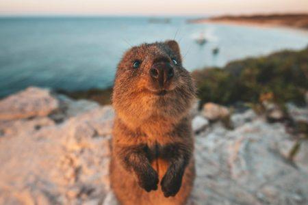 Смешные фото животных, которые поднимут вам настроение