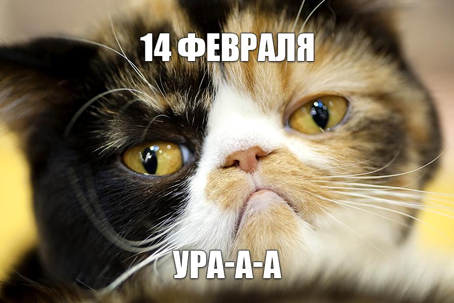 Ru Memes 01