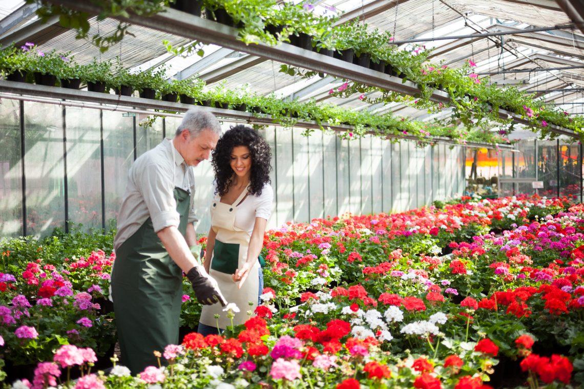 женщина и мужчина выбирают цветок в теплице фото