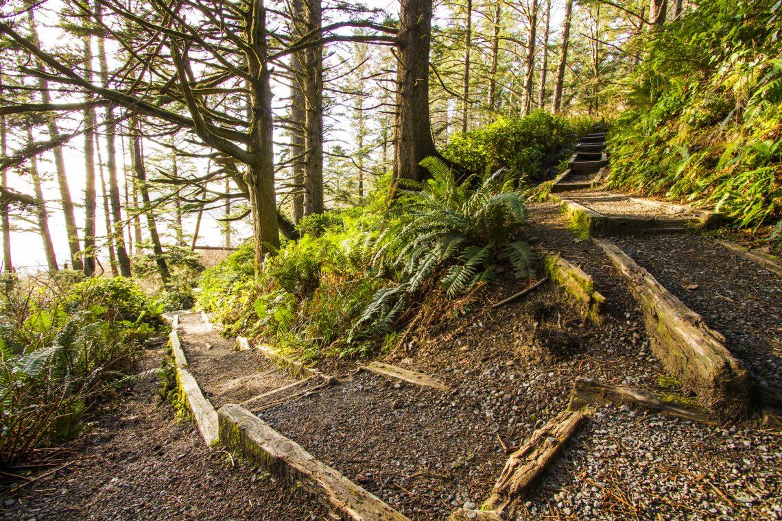 развилка в лесу фото