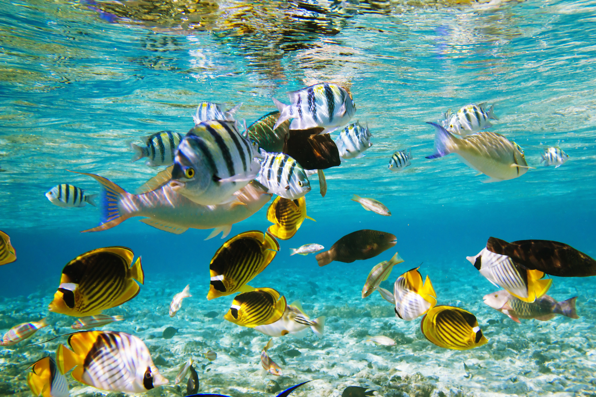 Фото коралловый риф