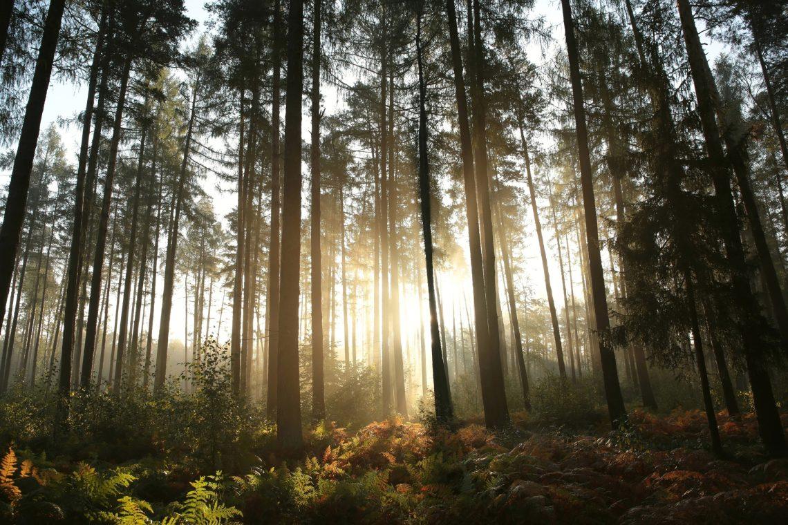 Осінній ліс у тумані фото