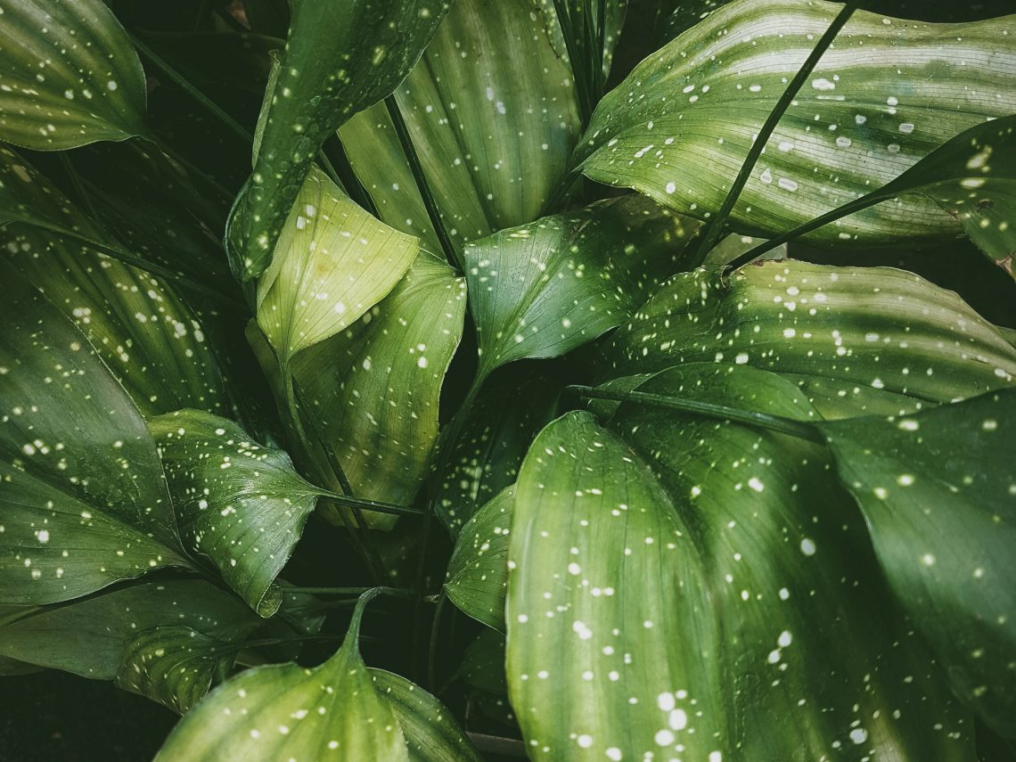 Фото тропічне листя з краплями дощу