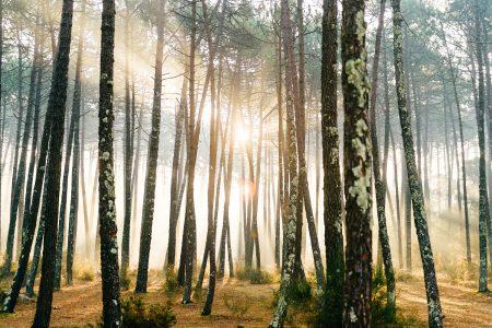 Закарбувати сезон: ідеї осінніх фотографій