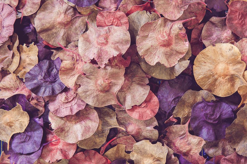 Фото рожеве і фіолетове сухе листя