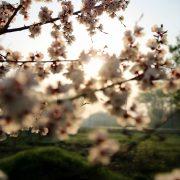 10 фотоколекцій і маркетингових ідей для весняних кампаній