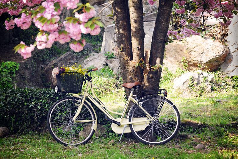 Фото велосипед біля дерева