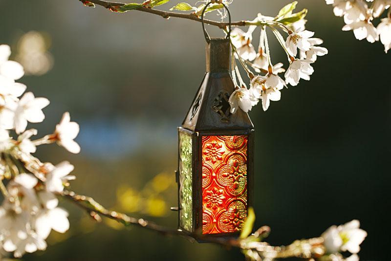 Фото ліхтарик на гілці квітучої вишні