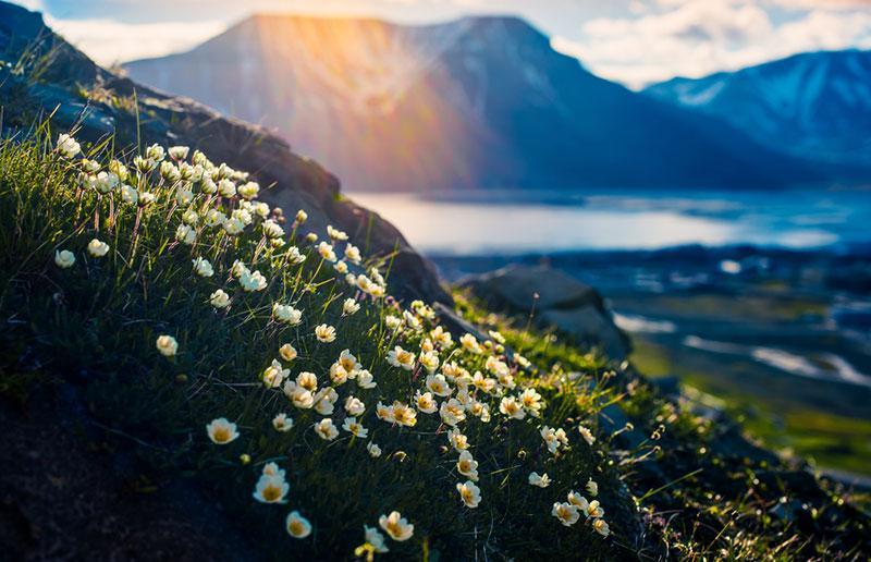 Фото білі квіти на пагорбі і гори