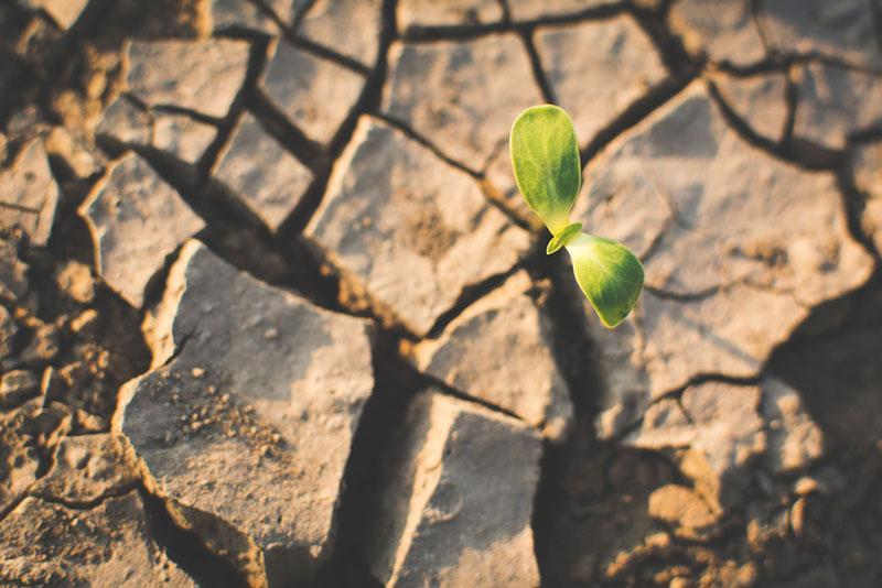 Фото зелений паросток пробивається крізь сухий грунт