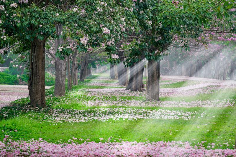 Фото квітучих дерев