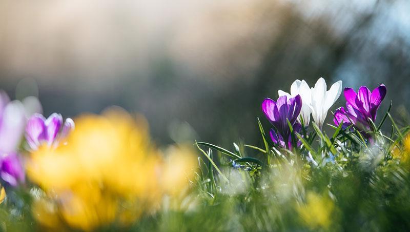 Фото весняні квіти