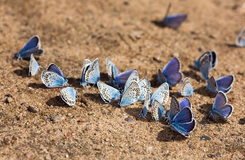Фото сині метелики на землі