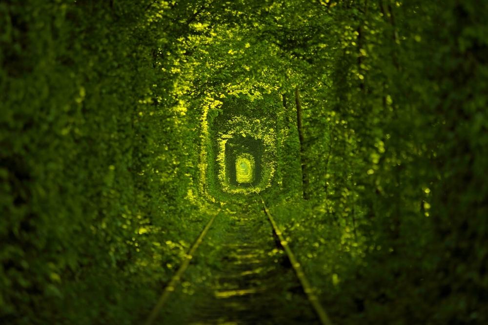 Фото Тунель Кохання Рівненська область Україна