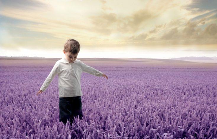 Lavender field © Depositphotos
