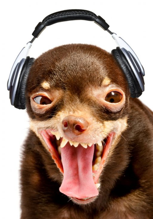 Ridiculous dog DJ. © Depositphotos