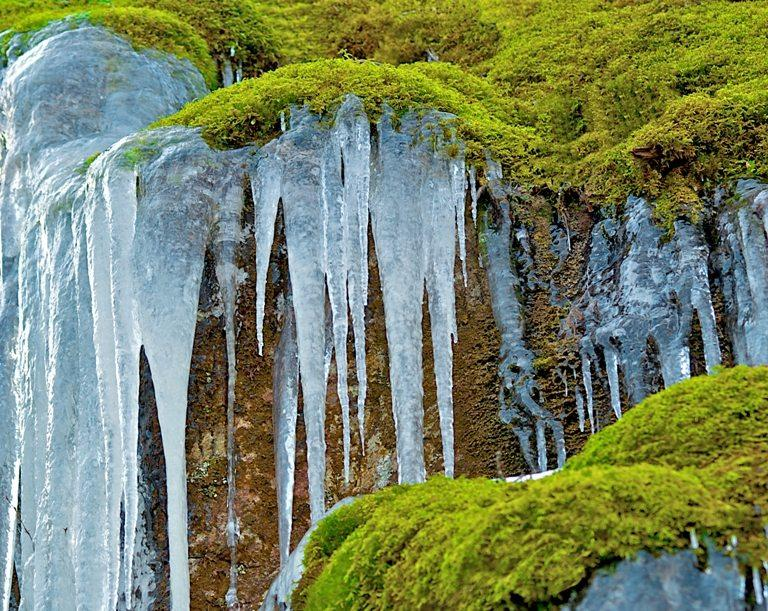Icicles in Moss © Depositphotos