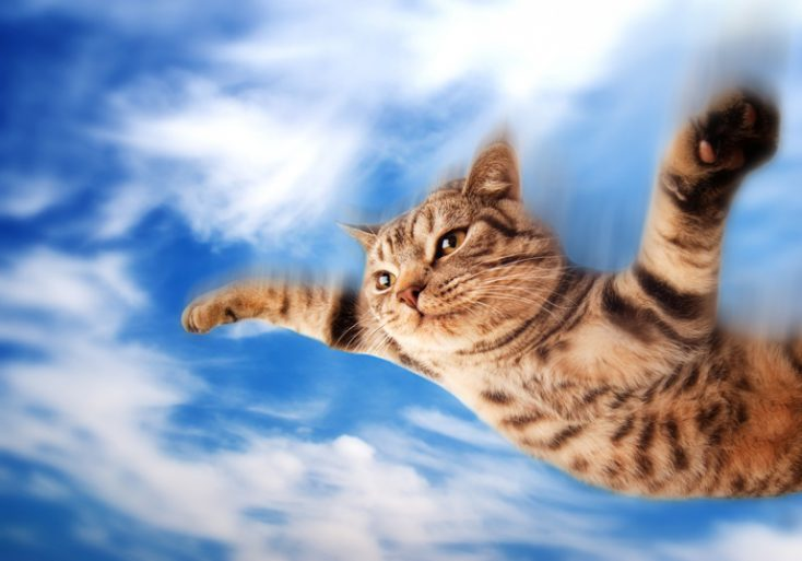 Flying funny kitten © Depositphotos